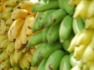 gelbe und grüne Bananen