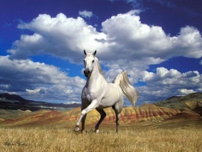 002 520x390 Конь в казачьей культуре (обновлено)