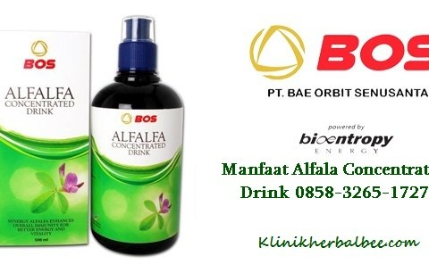Manfaat Alfalfa Concentrated Drink 0858-3265-1727