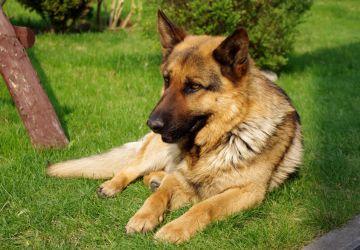 Máte doma psa? Tak toto by ste o ňom mali vedieť