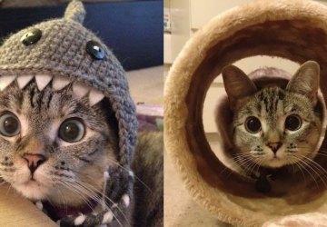 Príbeh najslávnejšej mačky na Instagrame. Toto je Nala!