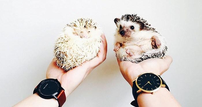 """20 roztomilých fotiek na oslavu dňa ježkov """"Hedgehog Day"""""""