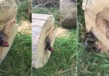 Zrúbal strom a následne z neho vychádzali čudesné zvuky. To, čo z neho vyliezlo je naozaj desivé