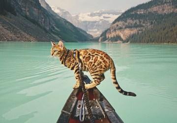 Suki je netradičnou cestovateľkou, ktorá spoznáva svet so svojou majiteľkou. Pozrite si úchvatné zábery nádhernej mačky a spanilej prírody