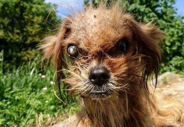 Zúbožený psík dostal druhú šancu na život. Takto krásne vyzerá po 8 mesiacoch