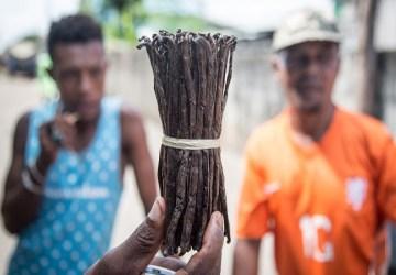 Vanilka z Madagaskaru je cennejšia než zlato. Kvôli cennej korenine sa tam vo veľkom odlesňuje a platí sa za ňu častokrát smrťou