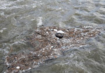 Dovolenkári, pozor! Chorvátske more je zaplavené výkalmi!