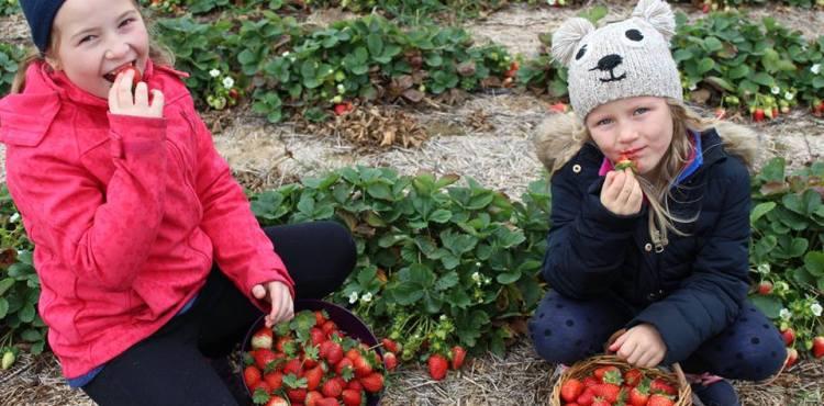 Jahody vnovembri úplne zadarmo? Môžeme si na nich pochutnať a zároveň podporiť dobrú vec