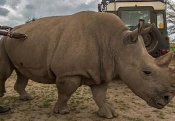 Príroda prišla o vzácne zvieratá. Toto sú druhy, ktoré v roku 2018 vyhynuli