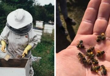 Dochádza k masívnemu úhynu včiel! Zo 40 včelstiev mi ostali štyri, hovorí včelár zo Šurian