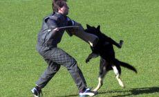 Tento nemecký ovčiak zo Slovenska je súčasťou špeciálnej jednotky psov na vyhľadávanie teroristov