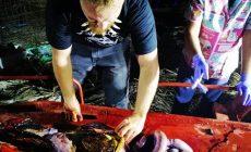 V tele tejto veľryby našli 40 kíl plastov. Pozrite si citlivé fotografie z pitvy