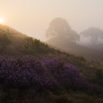 Heide mist veluwe