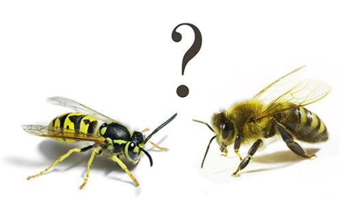 Через сколько проходит укус осы