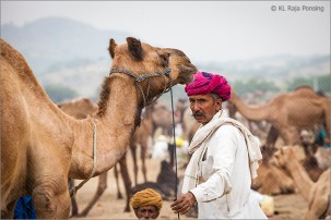 camel connection