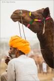 camel - keeper