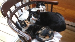 Pile of cats on chair