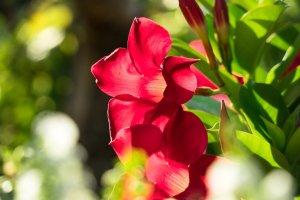 Welche Blumen Blühen Den Ganzen Sommer Im Garten / 15 ...