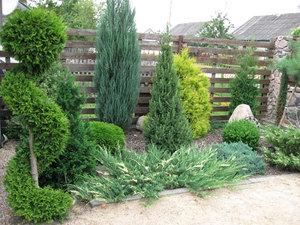 хвойники в саду и их дизайн фото название и уход за ними 7
