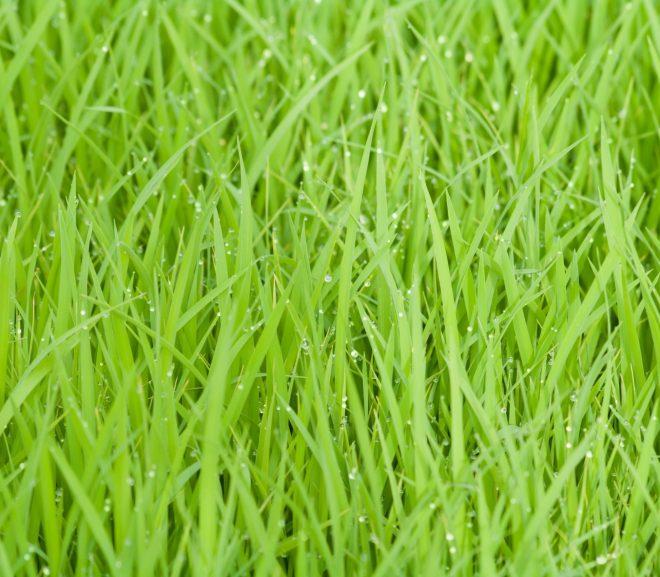 Met deze stappen leg je zelf de mooiste graszoden
