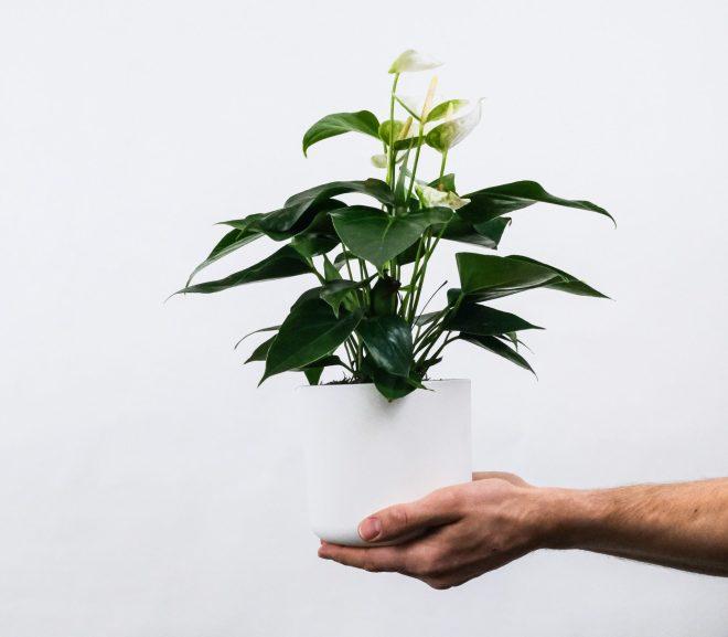 Kamerplanten verzorging voor beginners