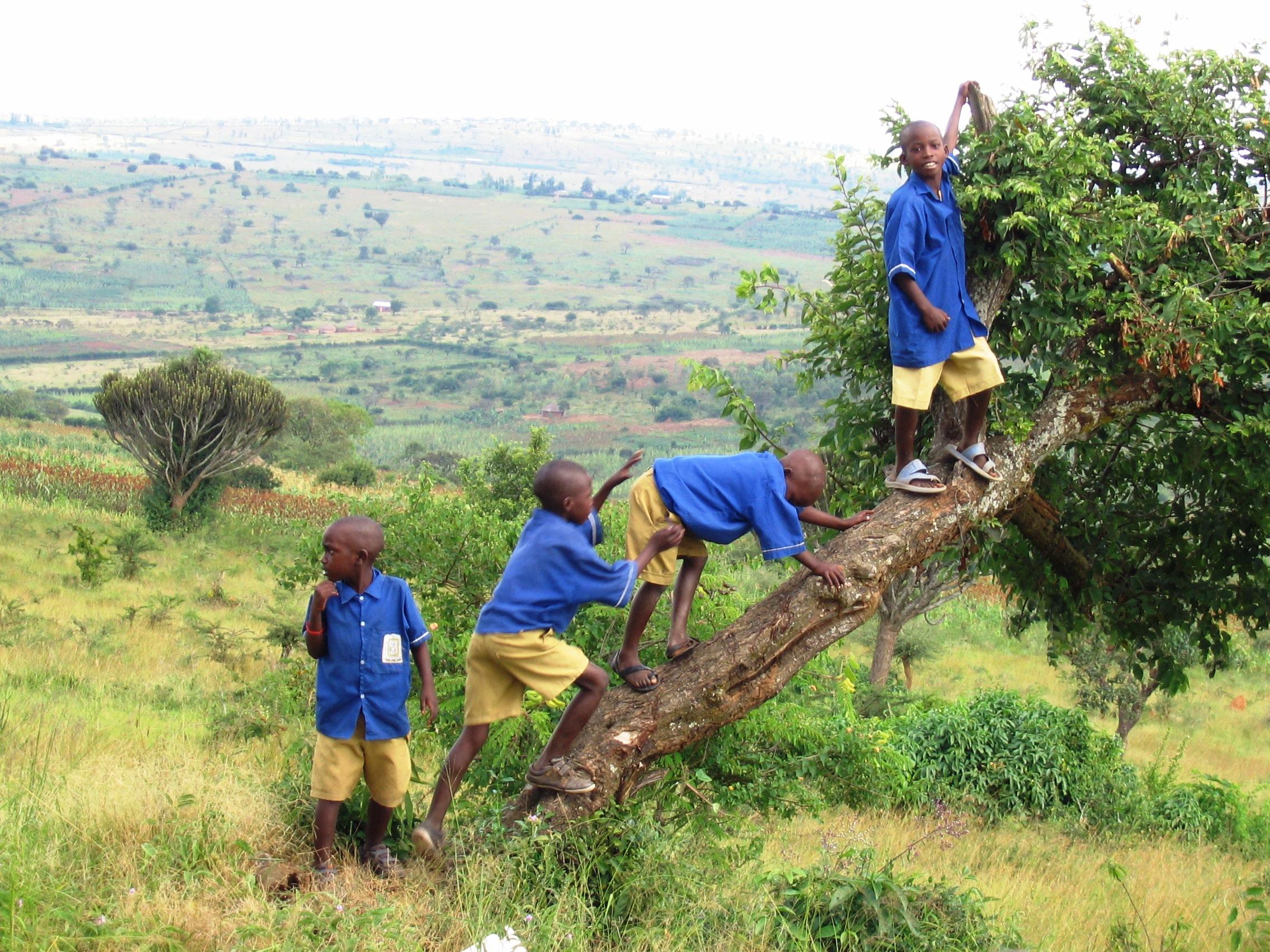 Gacundizi Primary School, boys in trees 1