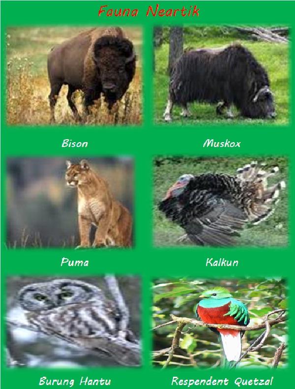 Persebaran Fauna Paleartik : persebaran, fauna, paleartik, Persebaran, Hewan, Geografi