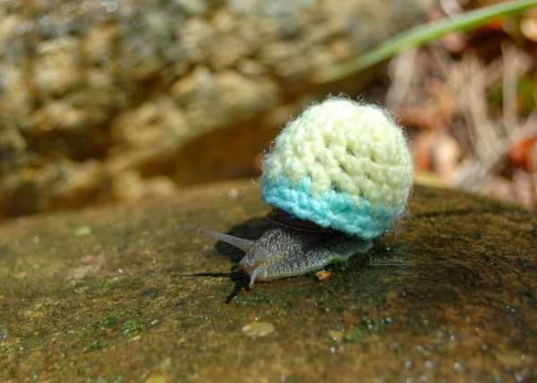 animals in sweaters 1 Adorable Animals Wearing Sweaters (35 photos)