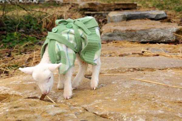 animals in sweaters 12 Adorable Animals Wearing Sweaters (35 photos)