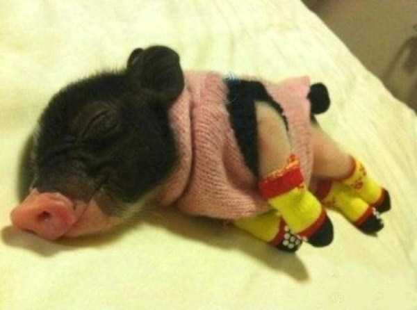 animals in sweaters 16 Adorable Animals Wearing Sweaters (35 photos)