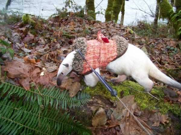 animals in sweaters 21 Adorable Animals Wearing Sweaters (35 photos)