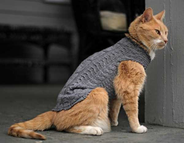 animals in sweaters 24 Adorable Animals Wearing Sweaters (35 photos)