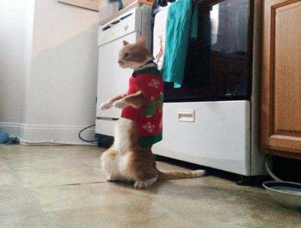 animals in sweaters 29 Adorable Animals Wearing Sweaters (35 photos)