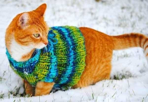 animals in sweaters 31 Adorable Animals Wearing Sweaters (35 photos)