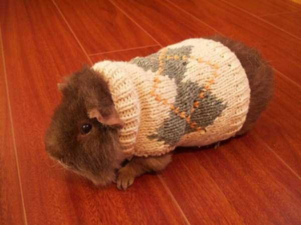 animals in sweaters 34 Adorable Animals Wearing Sweaters (35 photos)