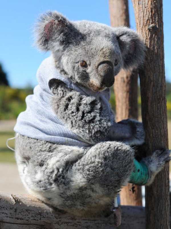 animals in sweaters 35 Adorable Animals Wearing Sweaters (35 photos)
