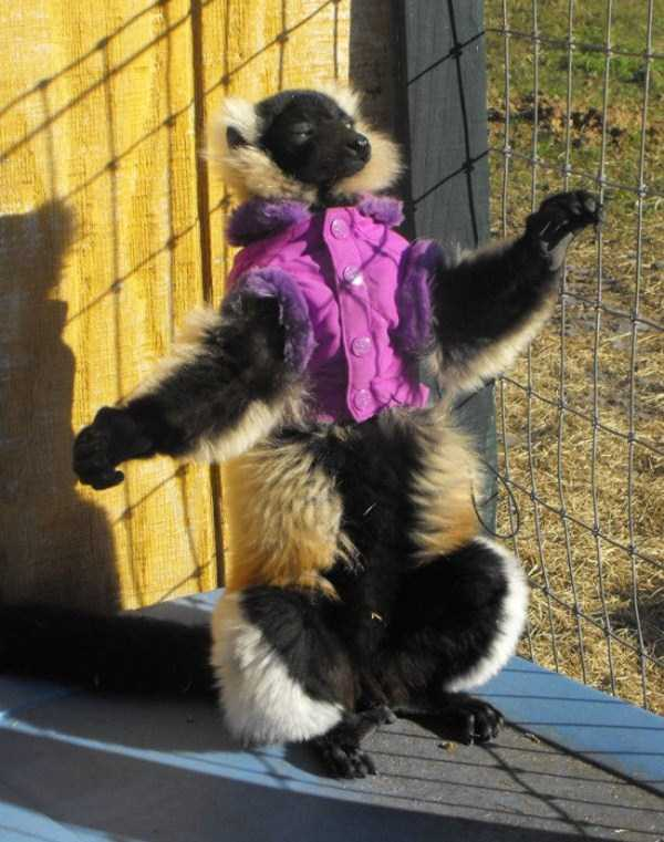 animals in sweaters 7 Adorable Animals Wearing Sweaters (35 photos)