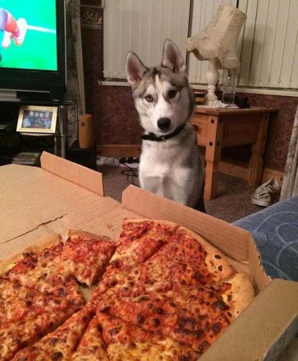 Animals Love Pizza Too  KLYKERCOM