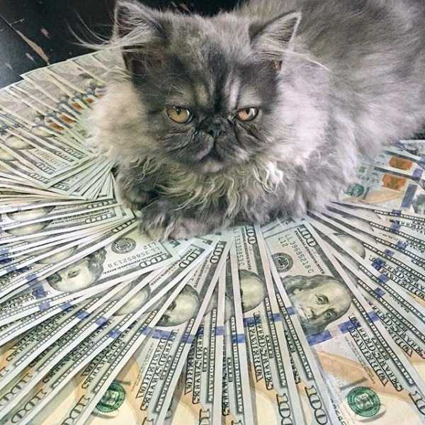 Cats Who Are Richer Than You Can Imagine  KLYKERCOM