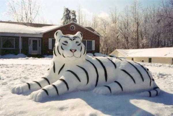 Have Cpas Dont Snow Funny Pictures Days