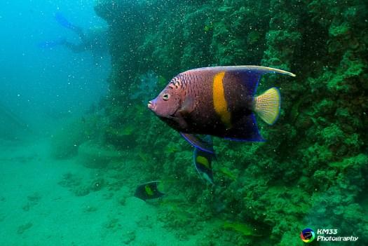 Old Club Reef