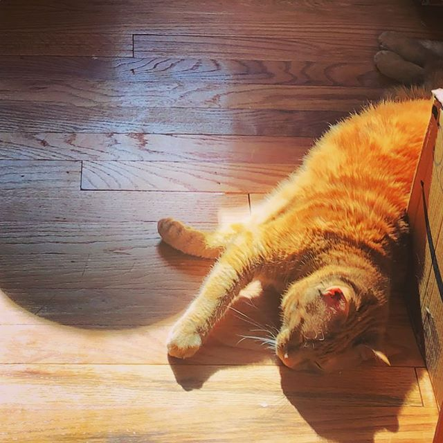 Paralyzed by the sunbeam .