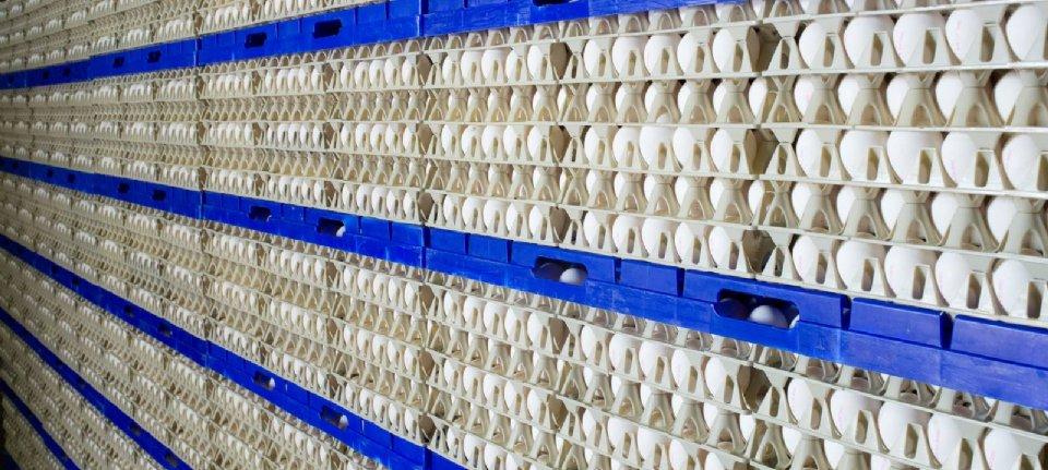Bewaarplaats voor eieren KMB4U