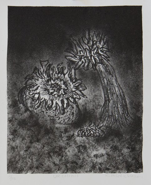 Urchins - lithograph, 2011