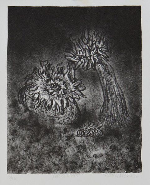 Urchins - lithograph, 2011