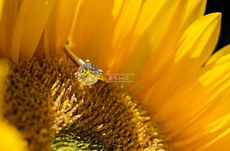 weddingring-sunflower-jewelry-macro-kmcnickle