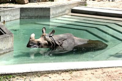 Java Nashorn