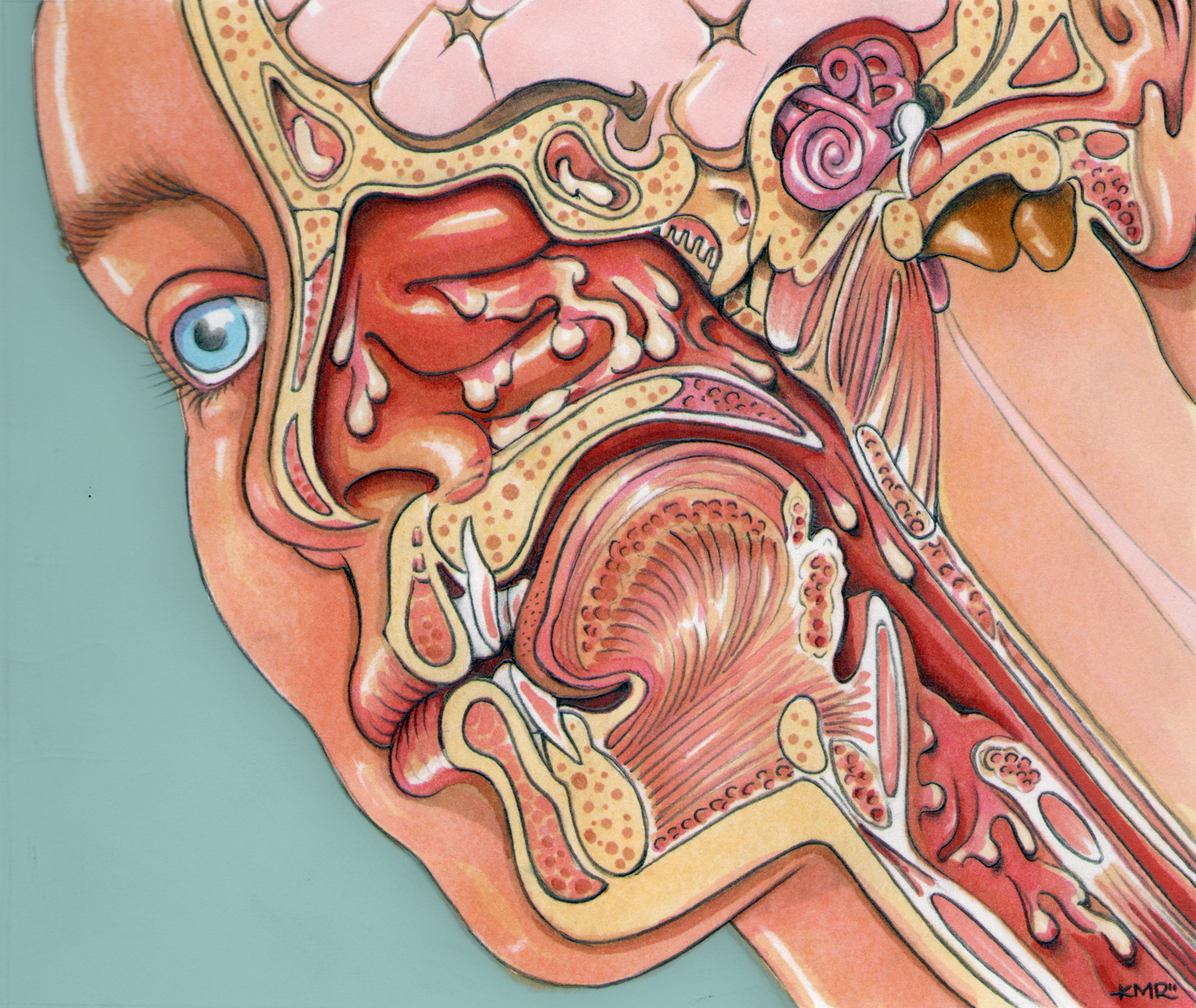 ear nose and throat diagram hayward de filter parts the art of kevin m rucker
