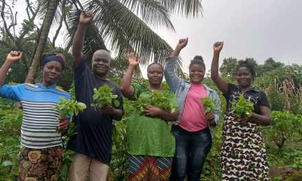 Agro Tech Liberia distributes Free Seeds and  Seedlings in urban Montserrado County.
