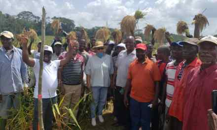 Liberia Agriculture Sector: Major Harvest Launched in Bong